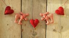 Rednose in love