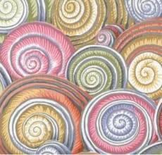 Kaffe Fassett Spiral shells grey